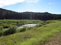 bighorn-forest