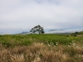 yaquina-view-2