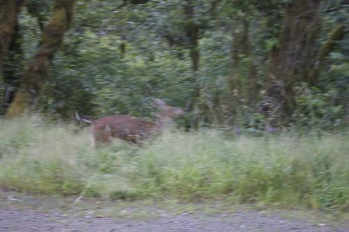 Bigfoot Deer