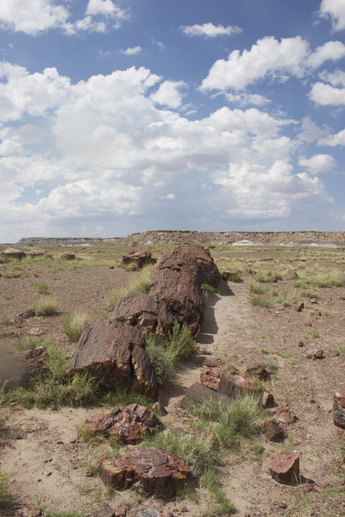Walking Petrified National Forest