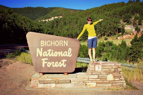 Bighorn forest