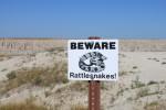 Badlands Rattlesnakes